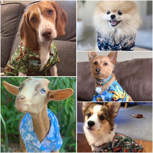Hawaiian Shirt Heroes: Eric's monthly round up – January